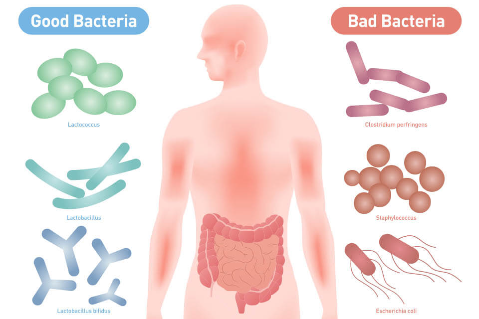 the difference between good bacteria and bad bacteria